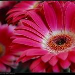 2009-6-2 blossom