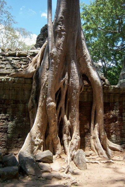 THE SURREAL TA PROHM