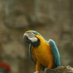 Jurong Birdpark