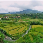 Rice Terraces on the way from Garut to Pangandaran