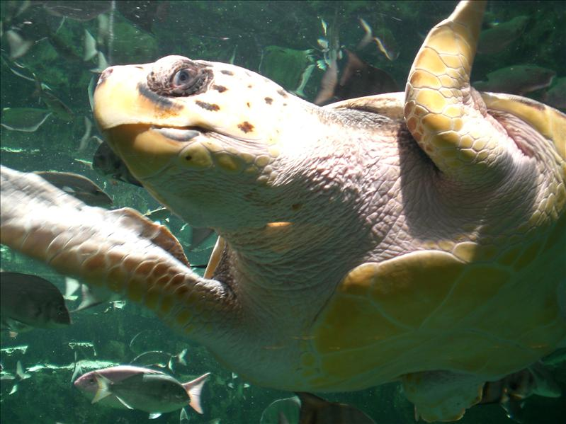 """Huge"" encounter with giant turtle at Georgia Aquarium"