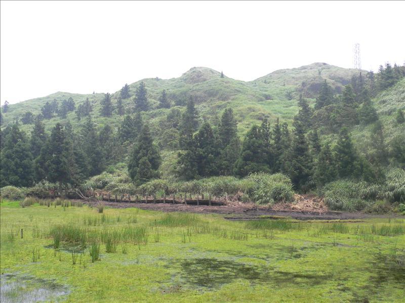本週的夢幻湖較上週更加綠意盎然
