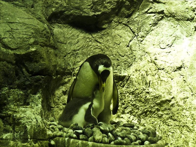 Osaka Aquarium