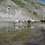Lago della Duchessa 2008