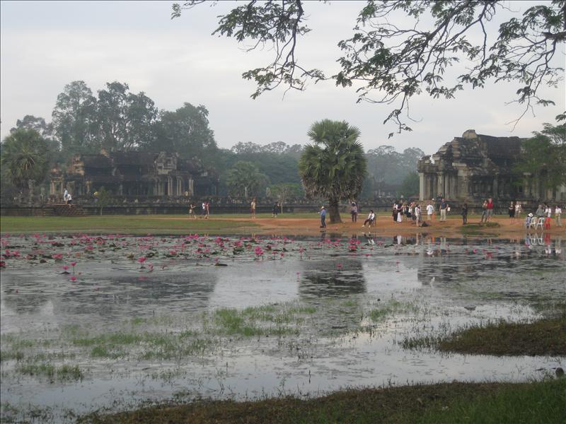 Lotus pond where people gathered for sunrise to capture the reflections of the temple