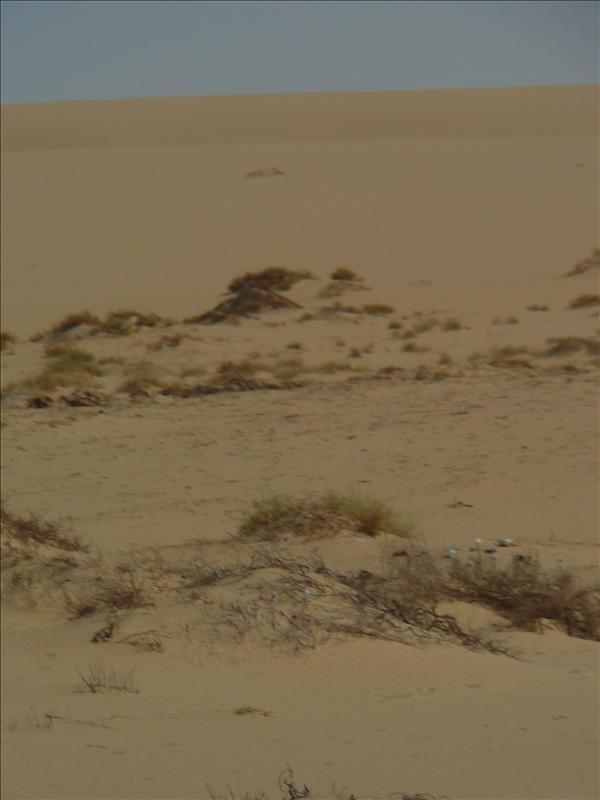Siwa - Woestijn 7