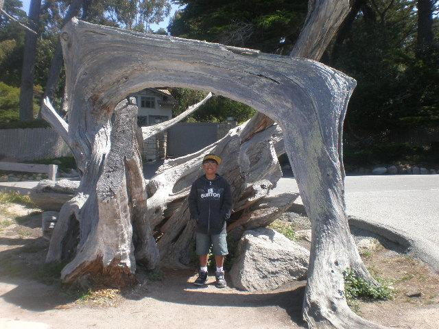 GHOST TREE @ 17-MILE DRIVE