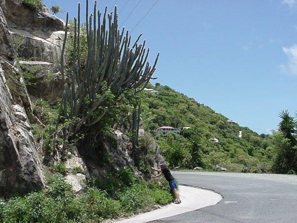 Or, you can enjoy the roadside vegetation