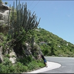 Or, you can enjoy the roadside vegetation