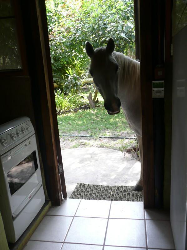 our pesky neighbor