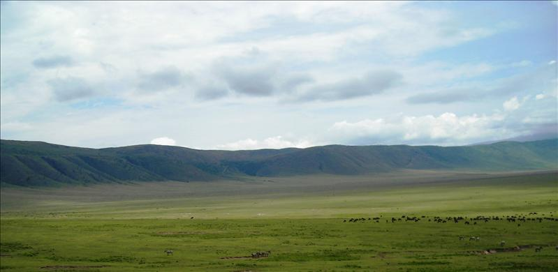 animals•Ngorongoro