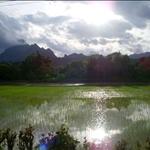 Nature (Laos)