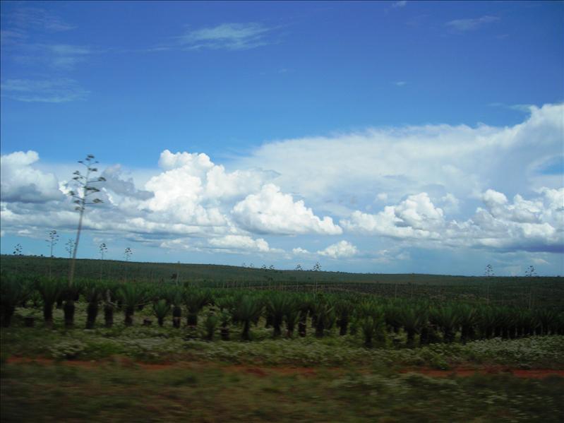 sisal•Tanzania