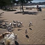 Sydney, March 2007