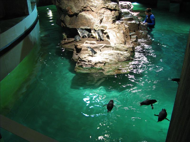 het boston aquarium bezocht