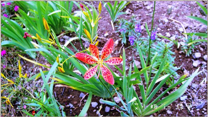 美麗的花朵-1