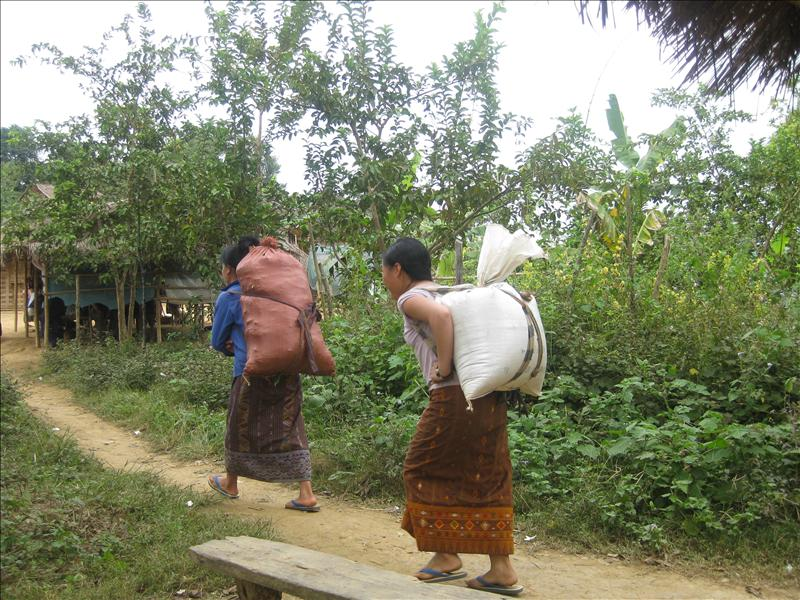 Hmong women carrying rice from one village to the next
