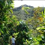 Kauai - Hiking tour, jungle