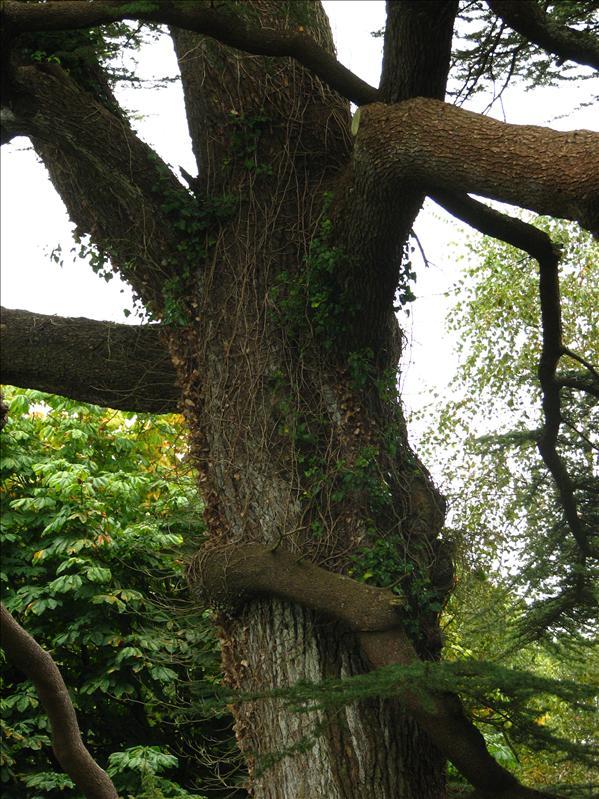 Found an odd limb wrapped around its own tree