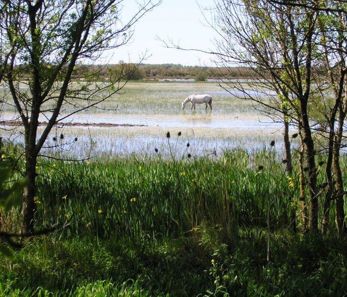 ...peaceful scenes of horses, birds .....