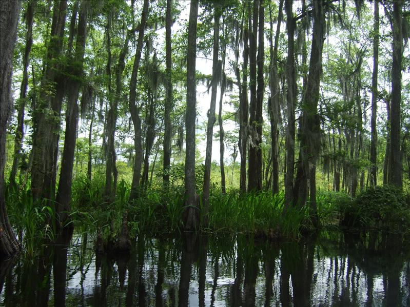Swamp Tour, New Orleans, Louisiana
