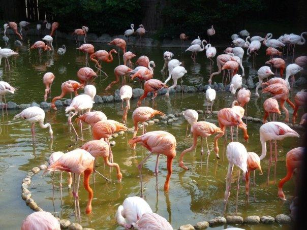 Flamingo sea