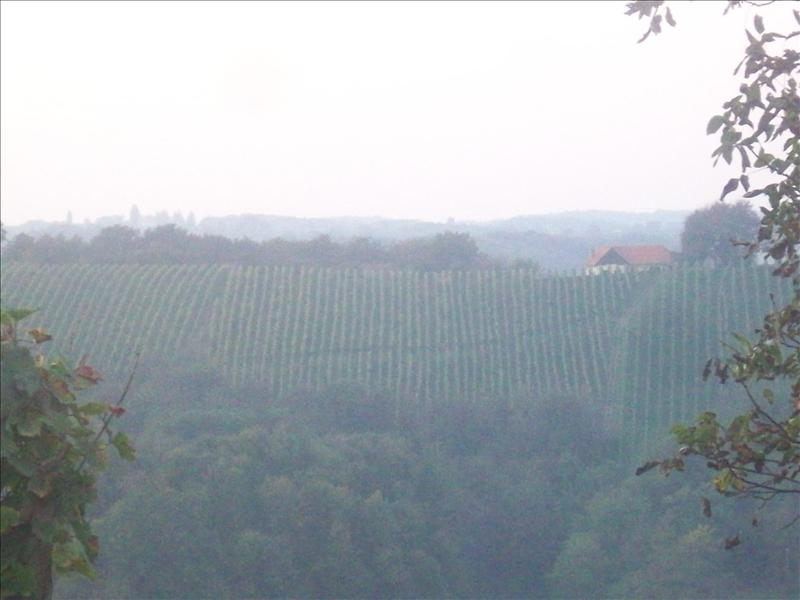 Thats the vinyard from a distance!