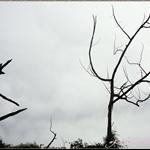 宅妮特愛的枯枝