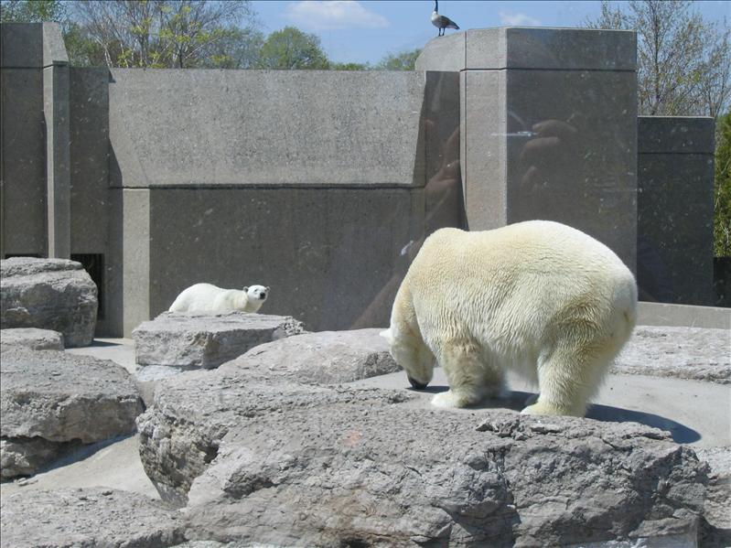 Toronto Zoo - 12