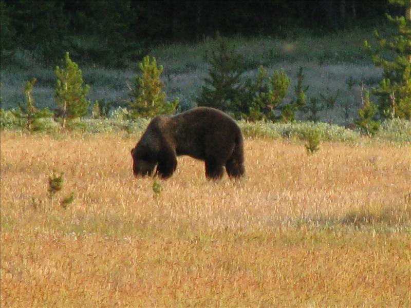 maar een grizzly is ook goed!