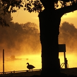 Lensbury - early morning by the Thames, Teddington, England