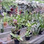 orchid world1.jpg