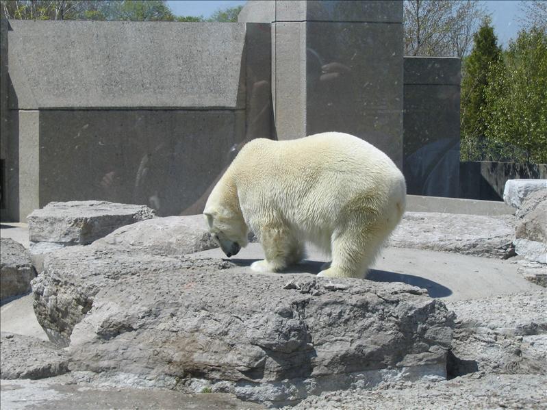 Toronto Zoo - 11