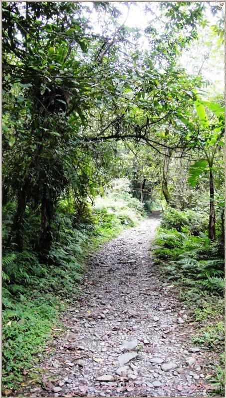 熱帶雨林FU-1