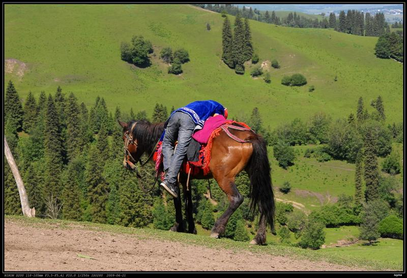 趴在马背上睡……orz