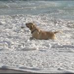 Good dog (2)