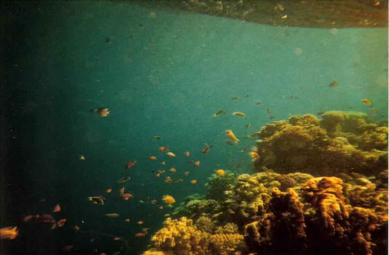 snorkeling in the Red Sea