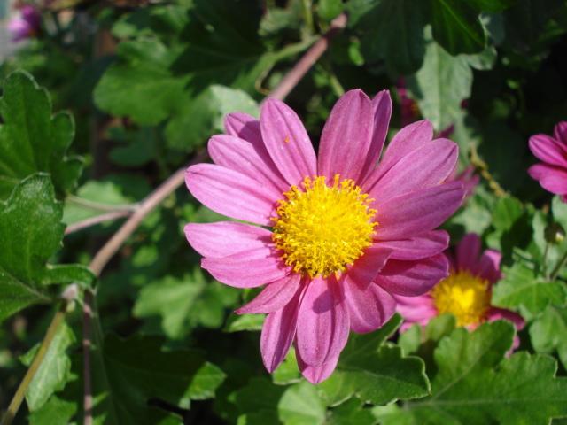 Field flowers2