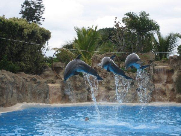 Flying Circus i vann
