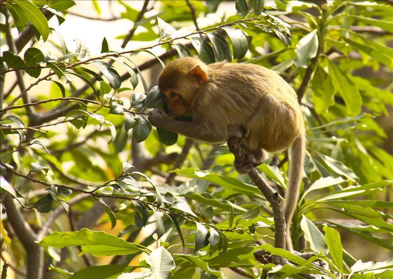 Monkey Island, Halong Bay