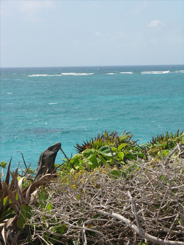 l'iguana vanitosa in posa