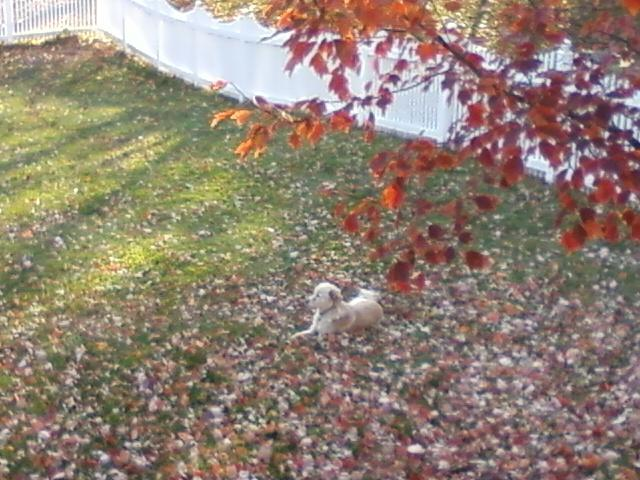 a dog in the leaves