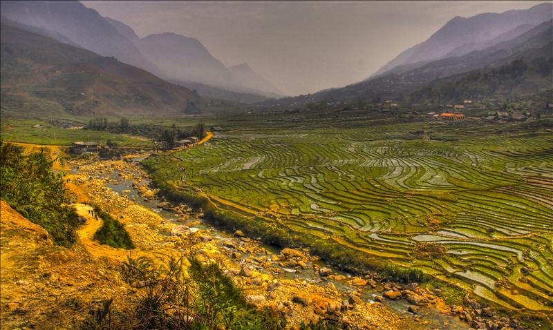Rice fields around Sapa