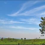 Tea-plantations in bandung.