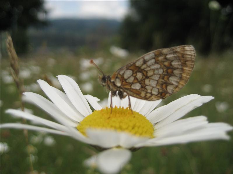 One of my favourites pictures with butterflyes :)