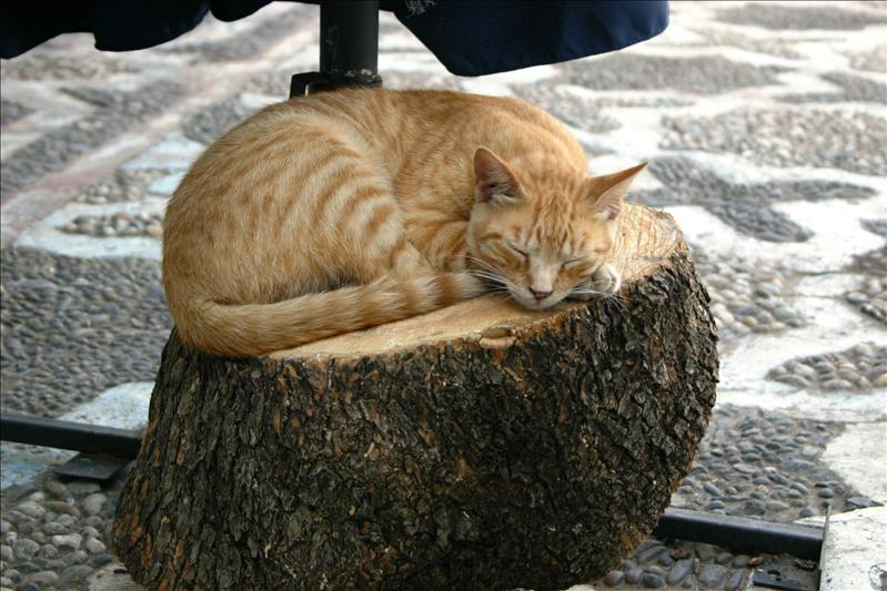 cat nap in Plaza Hauta...