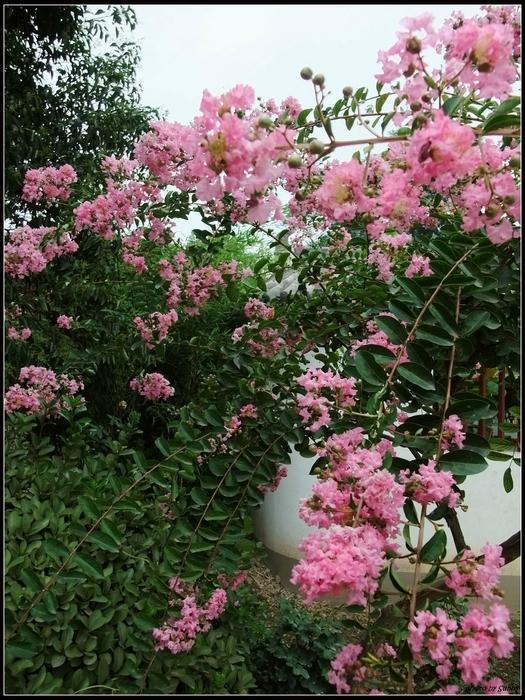 花很美麗2