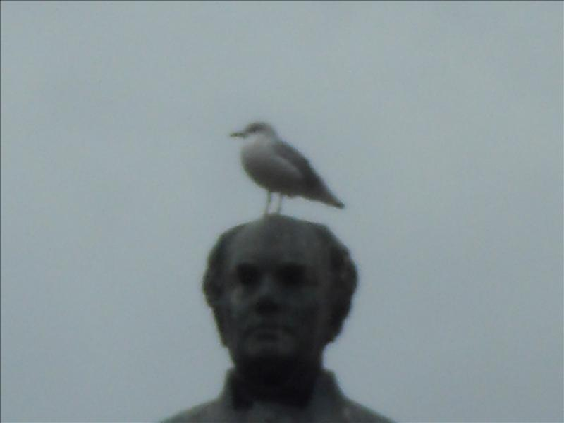 """The bird """"king of the world"""""""
