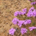 flowers•Dubbo
