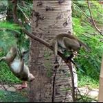 Des singes qui jouent dans un parc